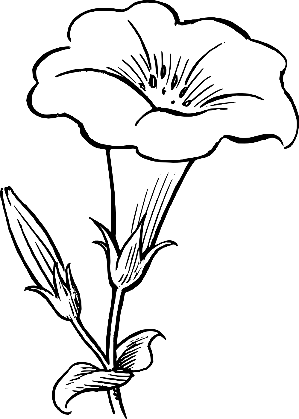 Line Drawing Jasmine Flower : Dragonfly clipart black and white panda free