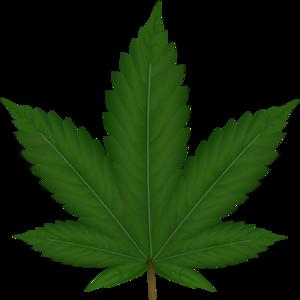 algae%20clipart