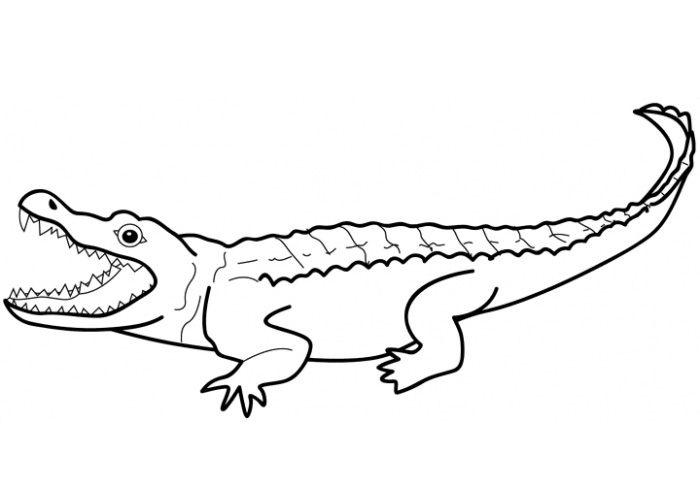 Alligator Coloring Pages Page