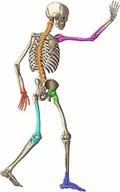 Anatomy Clip Art Images | Clipart Panda - Free Clipart Images