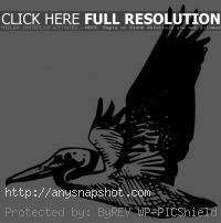 animal%20reading%20clipart%20black%20and%20white