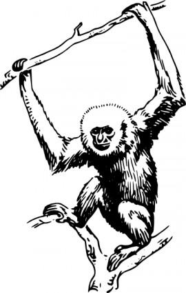 ape-20clipart-ape_clip_art_6991.jpg
