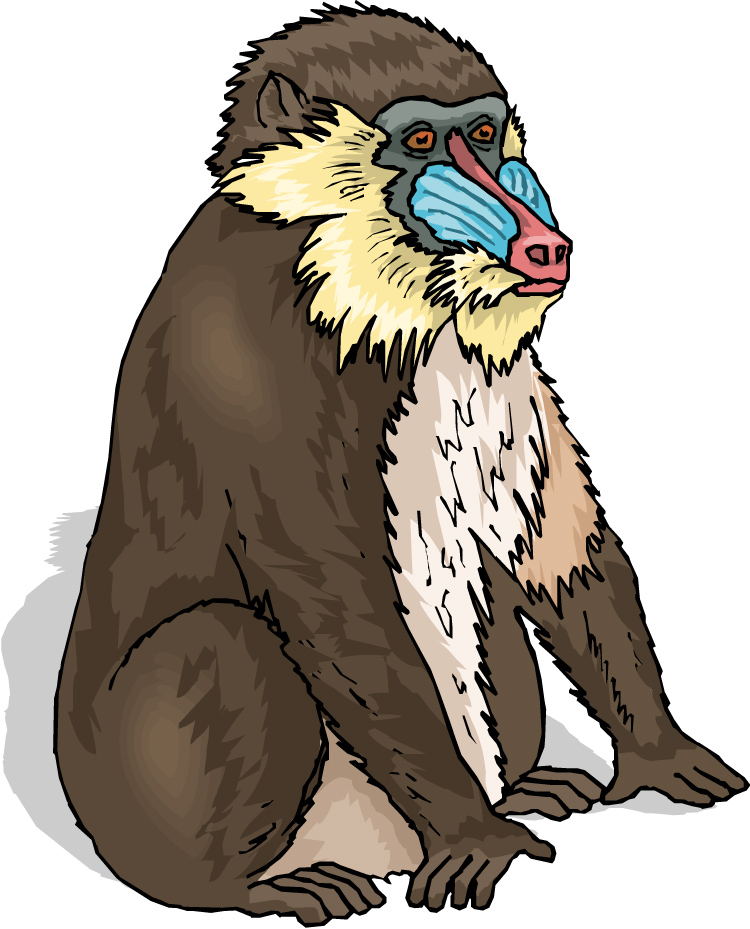 baboon clipart clipart panda free clipart images baboon clipart black and white Zebra Clip Art