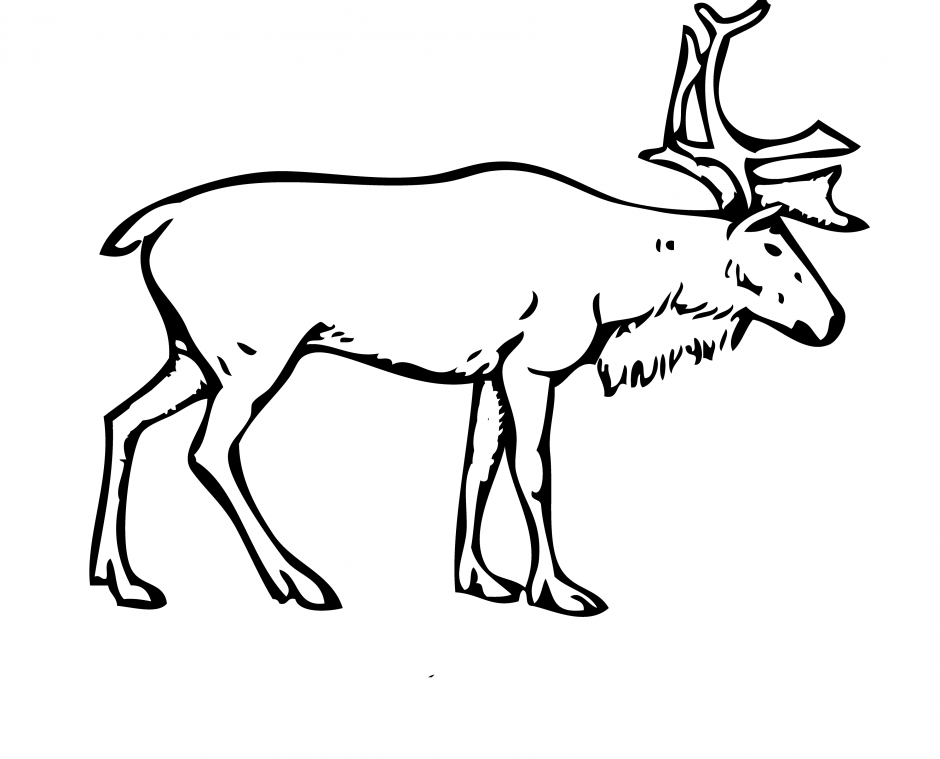 baby20deer20coloring20pages - Deer Coloring Pages