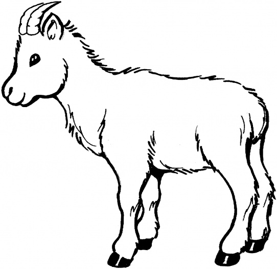 baby%20goat%20clipart