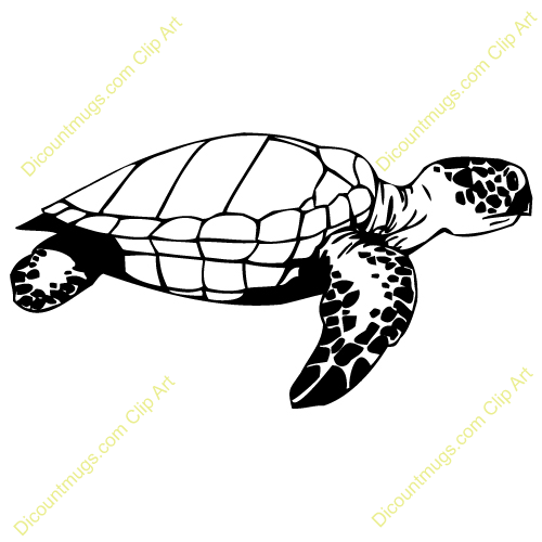 baby turtle clipart clipart panda free clipart images rh clipartpanda com baby turtle clipart black and white baby turtle clipart black and white