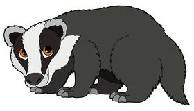 Image result for badger clipart