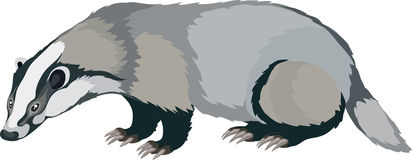 badger clipart clipart panda free clipart images rh clipartpanda com badger clipart black and white wisconsin badger clipart