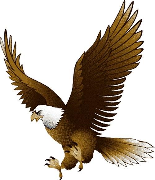 Pics Photos Bald Eagle Clip Art