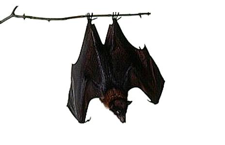 Bat 20clipart | Clipart Panda - Free Clipart Images