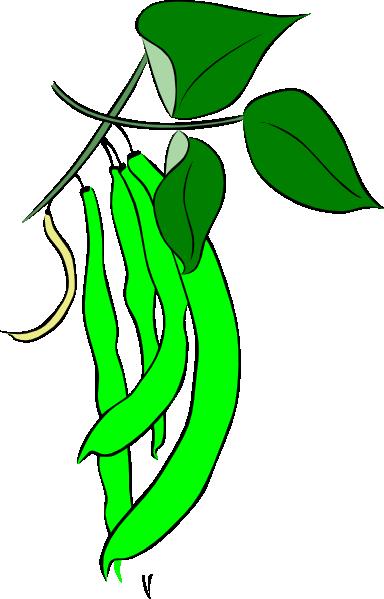 bean plant clipart clipart panda free clipart images rh clipartpanda com bean clip art images screen beans clipart