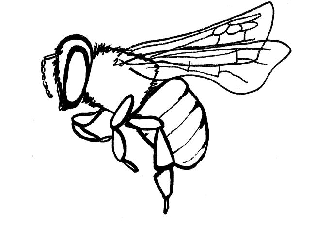 Line Drawing Bee : Bee and flower drawing clipart panda free images