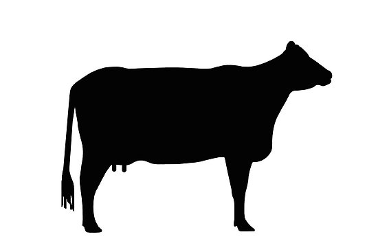 cow dairy farm project report pdf
