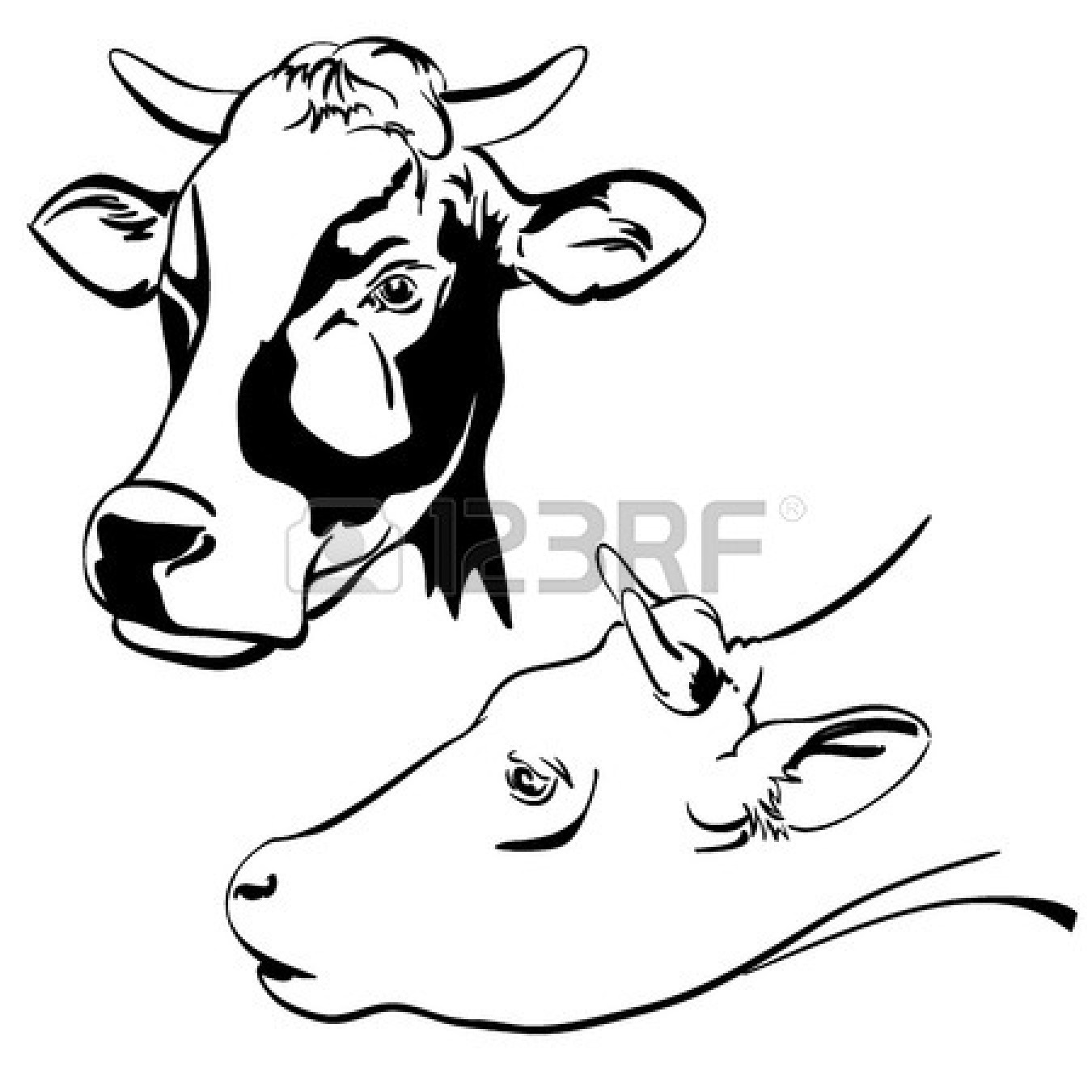 Line Drawing Cow Face : Dairy cow face drawing