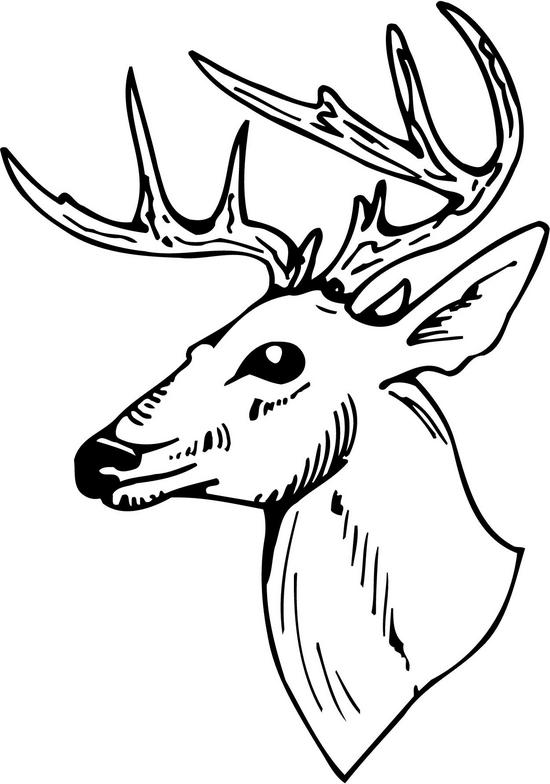 Clip Art Deer Head Clip Art deer head clipart black and white panda free whitetail clipart