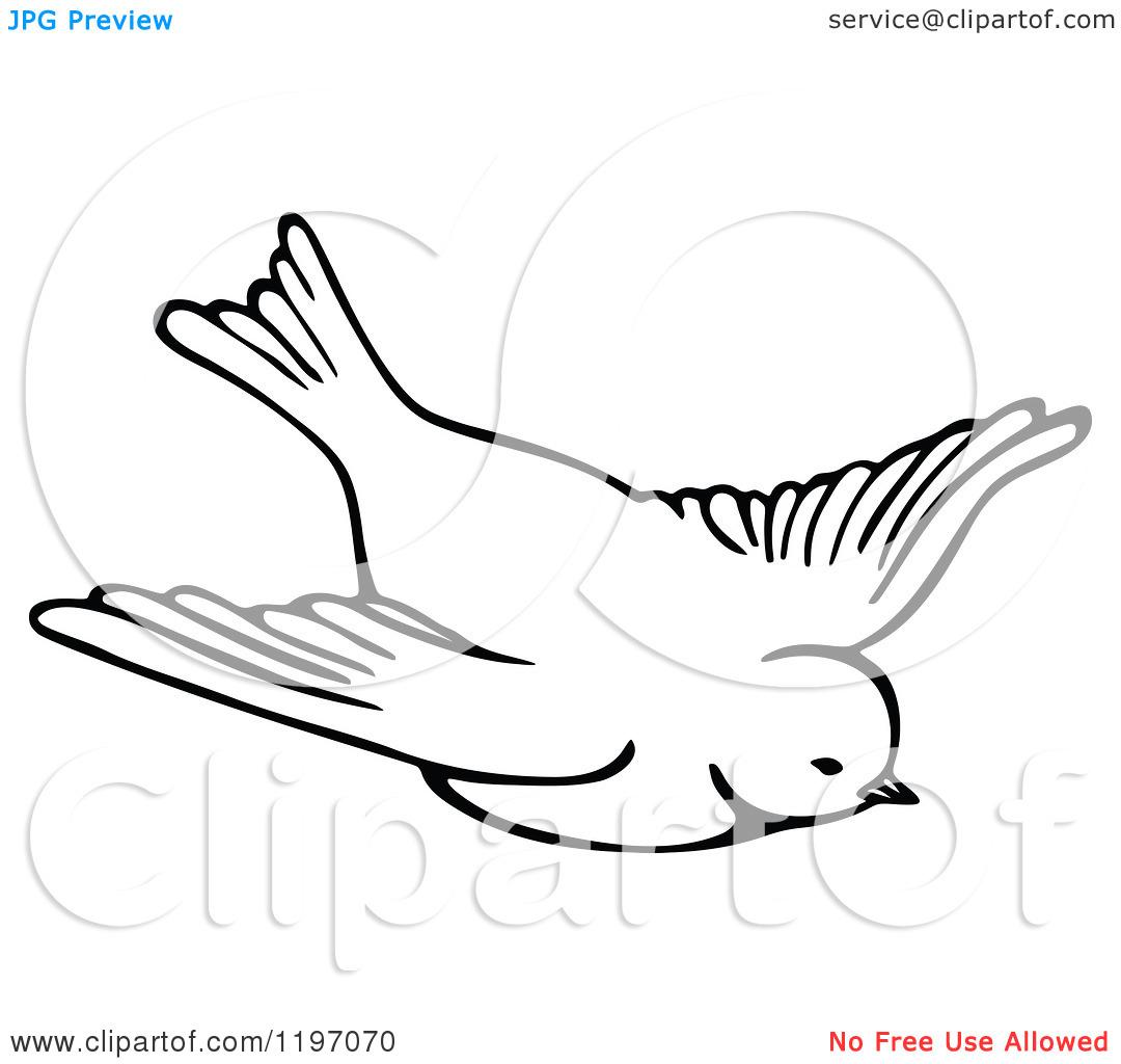 Flying Parrot Clipart Black And White | www.pixshark.com ...