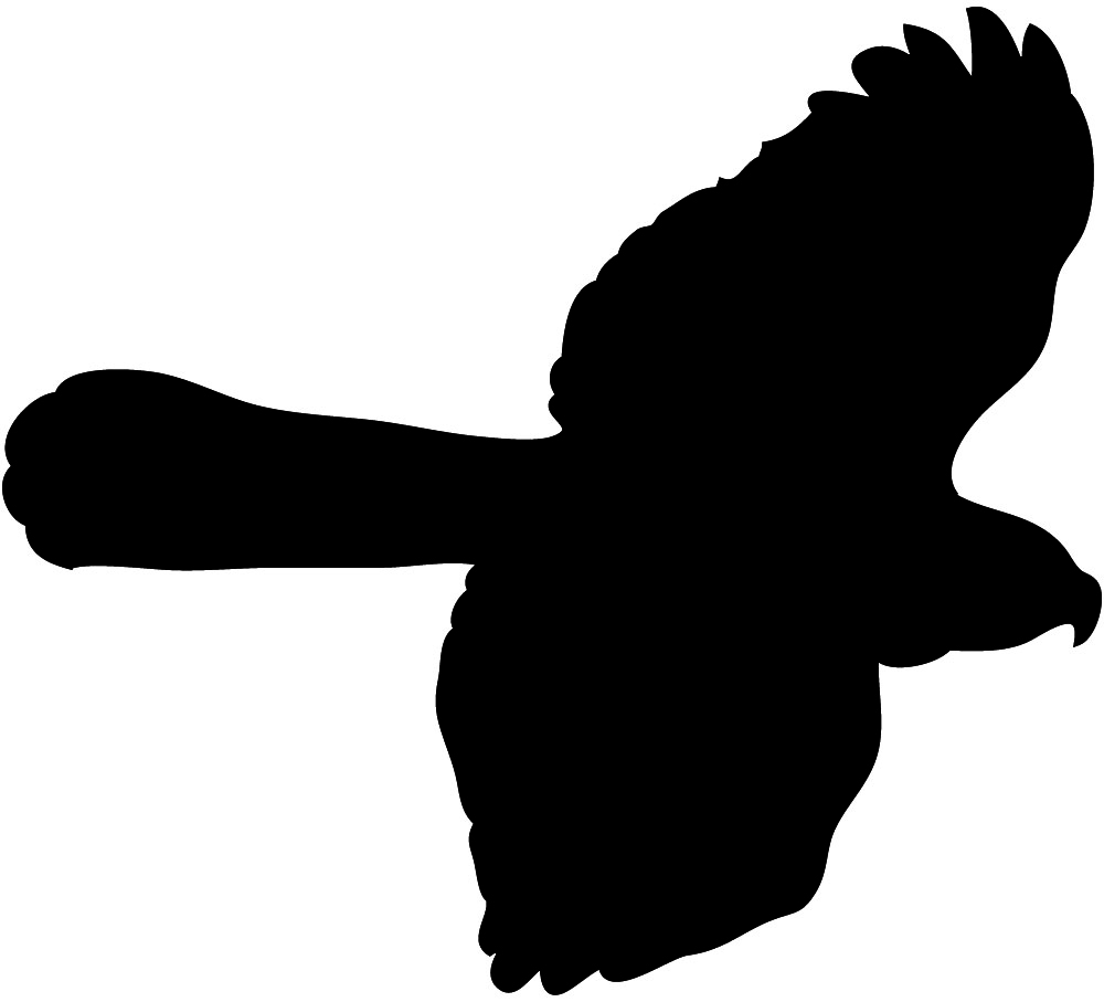 Bird Hunting Clipart | Clipart Panda - Free Clipart Images