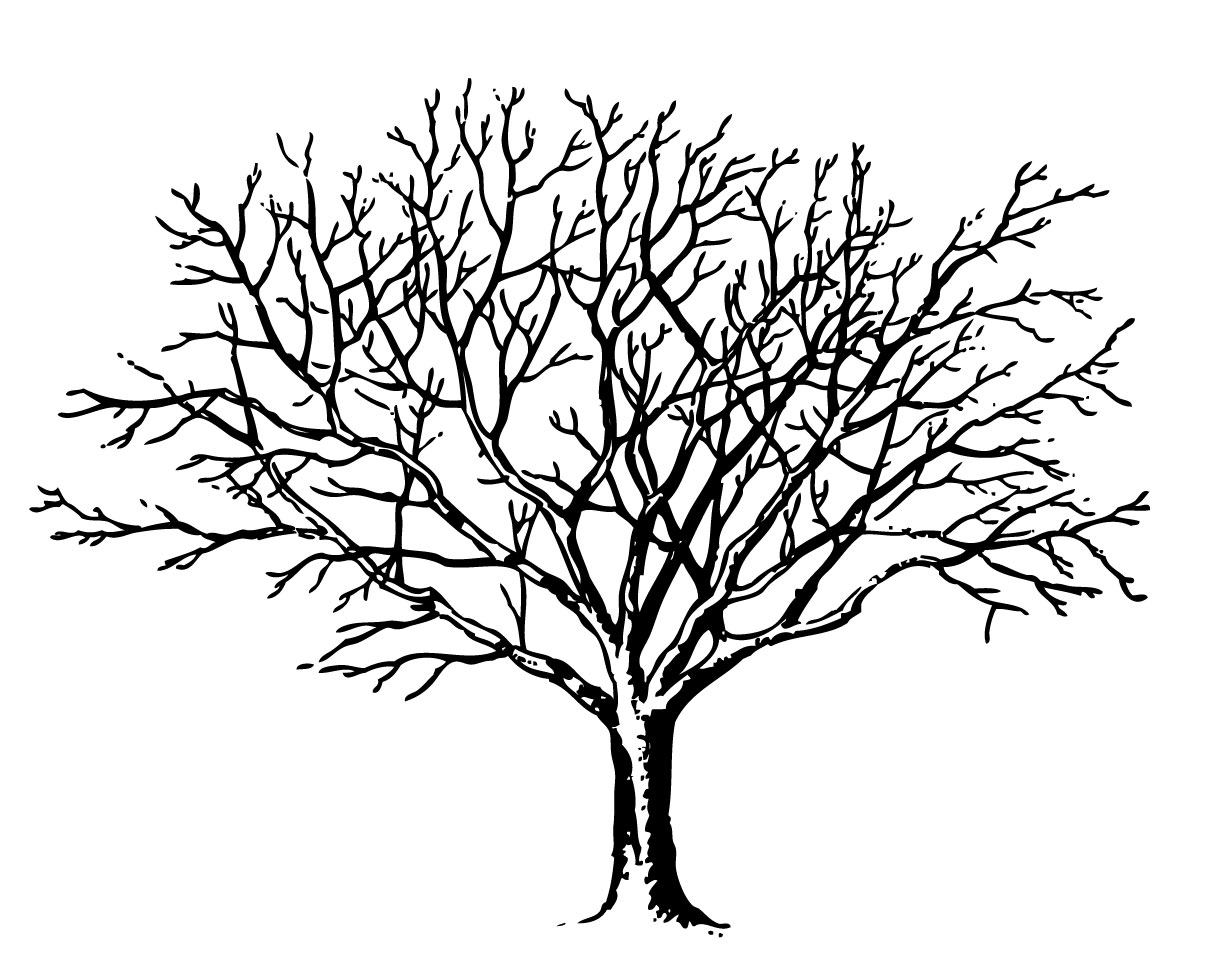 Tree Line Art Design : Bare tree clipart black and white panda free