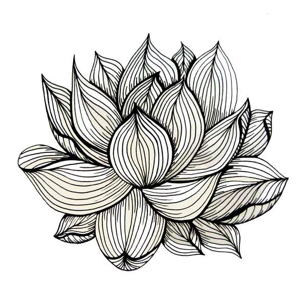 Black Line Flower Drawing : Lotus flower black and white clipart panda free