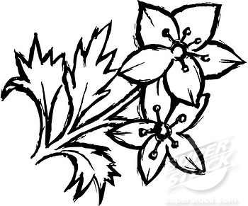 Black and white flower drawing clipart panda free clipart images black20and20white20flower20drawing mightylinksfo