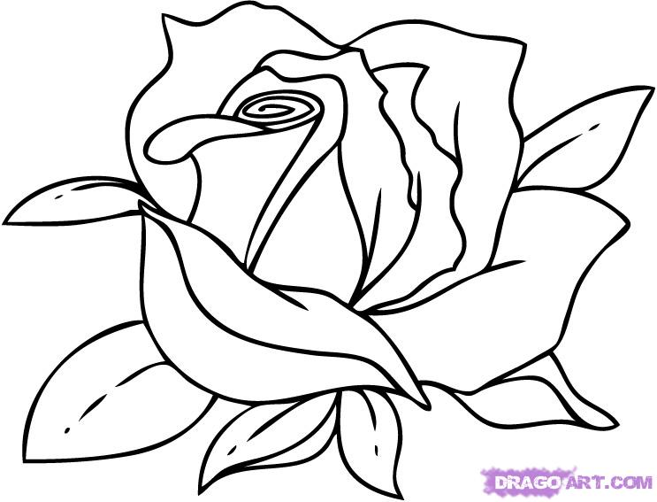 Cartoon Flower Line Drawing : Black and white flower drawing clipart panda free