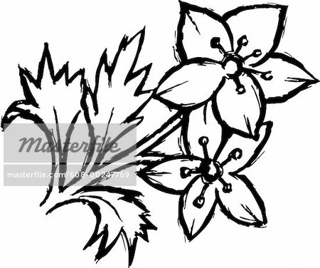 Drawings Of Flowers In Black And White Black and whit.