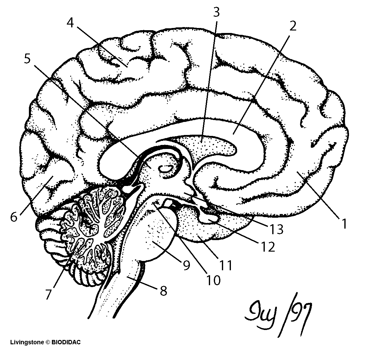 blank microscope diagram