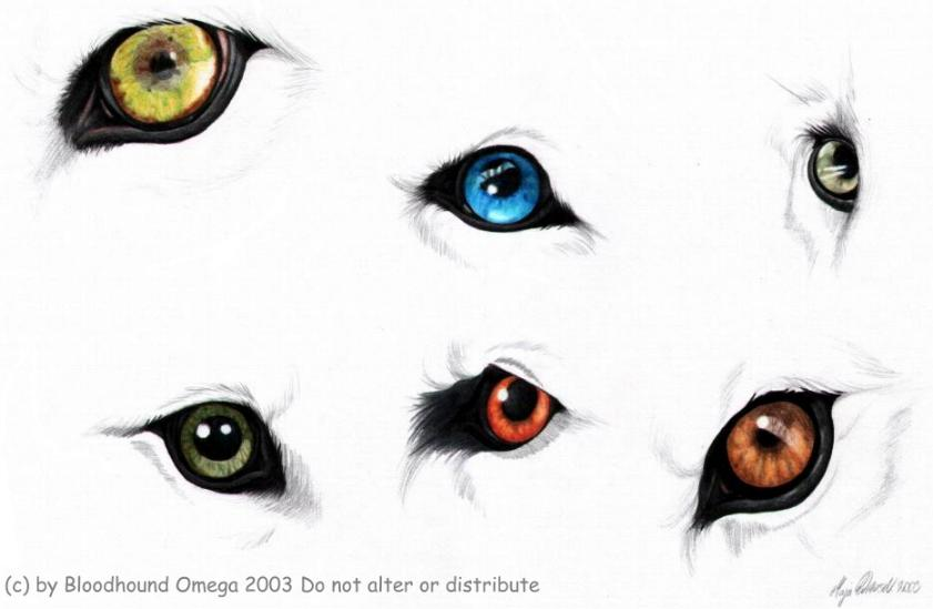 anime wolf eye drawing: Clipart Panda - Free Clipart Images