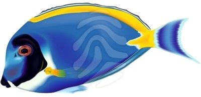 blue%20fish%20clip%20art