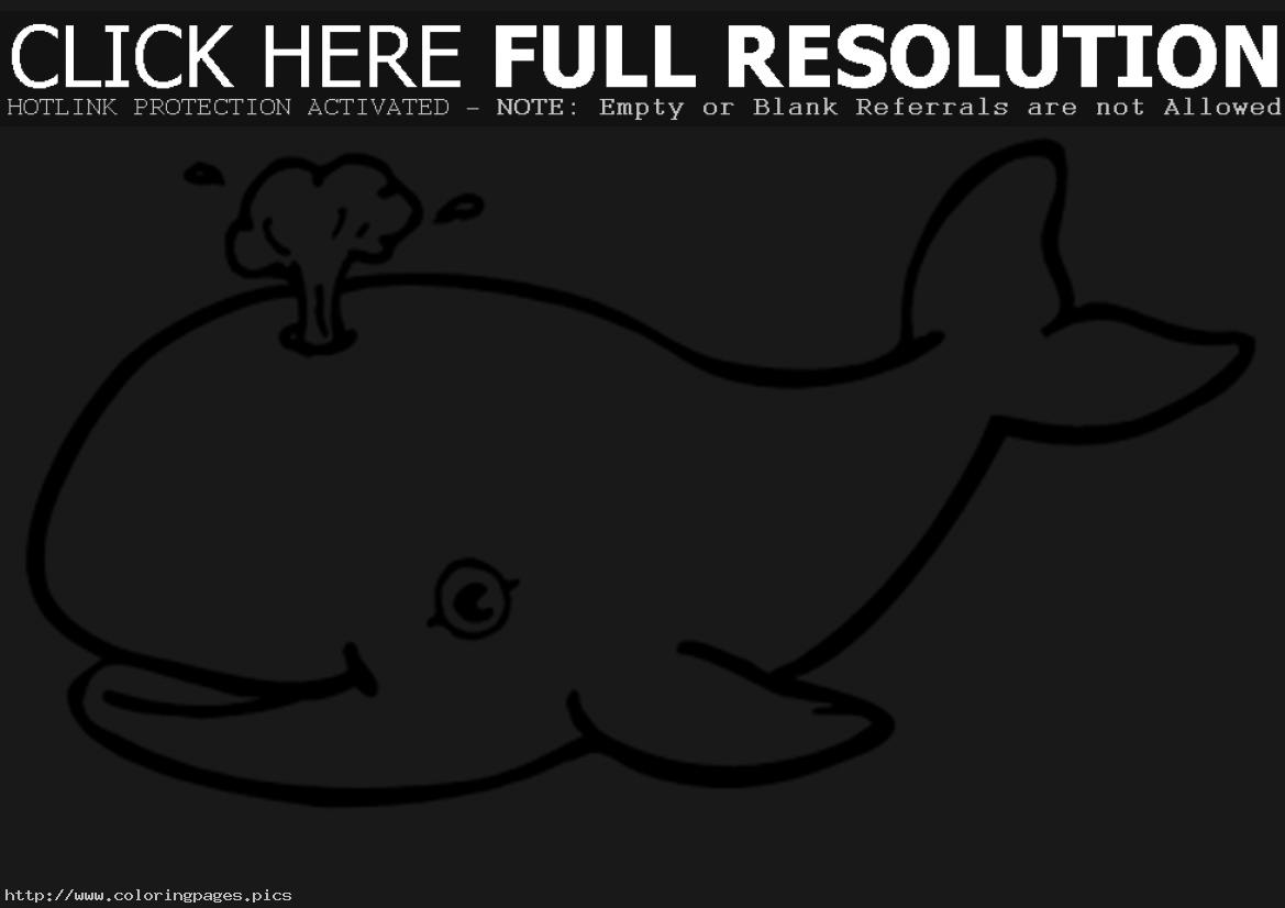 blue whale pictures clipart panda free clipart images