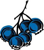 blueberry%20clipart%20black%20and%20white
