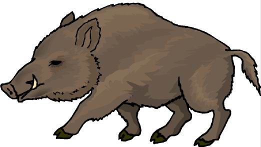 Boars clip art | Clipart Panda - Free Clipart Images