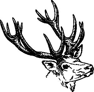 Boar%20Clipart
