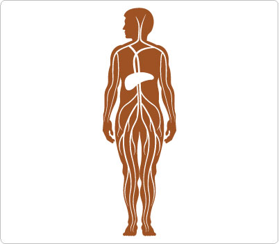 in human body clip art clipart panda free clipart images rh clipartpanda com human body clipart black and white human body clipart png