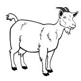 Boer Goat Outline | Cl...