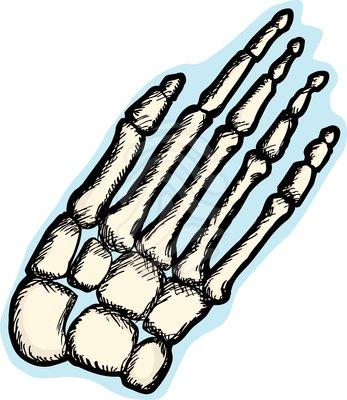 clip art human hand bones clipart panda free clipart images rh clipartpanda com skeleton bones clipart skeleton bones clipart