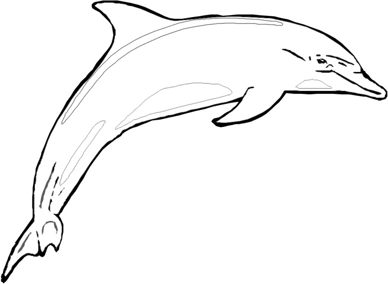Bottlenose dolphin drawing clipart panda free clipart for Bottlenose dolphin coloring page