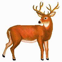 buck-clipart-buck.jpg