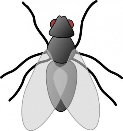 fly bug insect clip art clipart panda free clipart images rh clipartpanda com insect clipart for kids insect clipart black and white