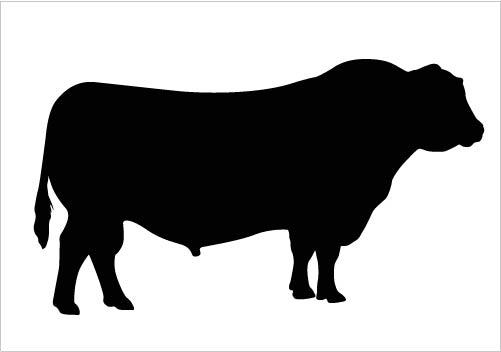 Think, Angus bull clip art something