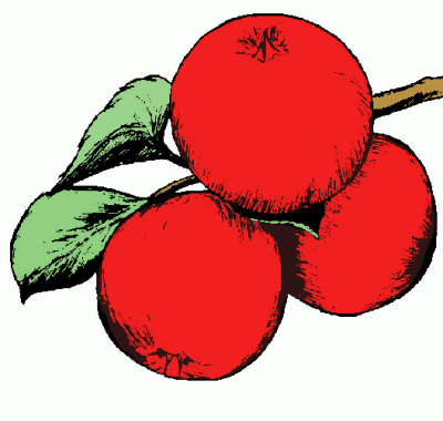 apple clip art gt clipart panda free clipart images rh clipartpanda com free clip art of apple and books free clipart pictures of apples