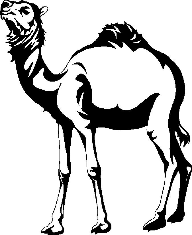 Camel Clipart