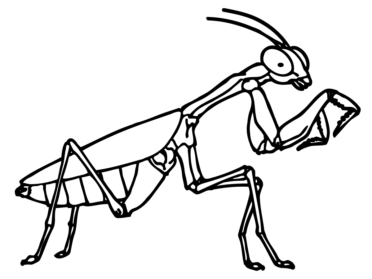 grasshopper drawing outline clipart panda free clipart Dragonfly Clip Art praying mantis clipart