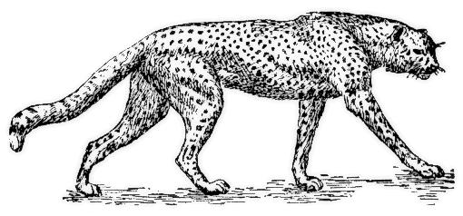 cheetah%20clipart%20