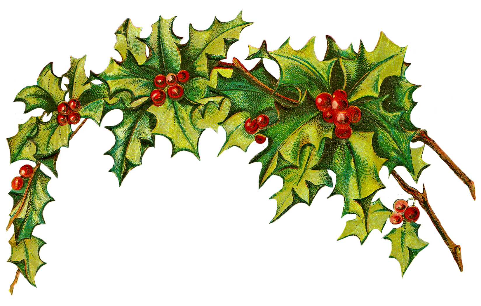clipart christmas holly clipart panda free clipart images rh clipartpanda com free holly clip art borders free clipart holly garland