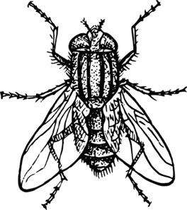 cicada%20clipart