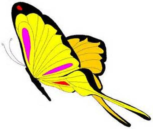 animated butterfly clipart free - photo #42