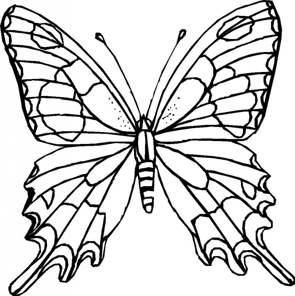 the gallery for gt butterfly drawings for kids with color