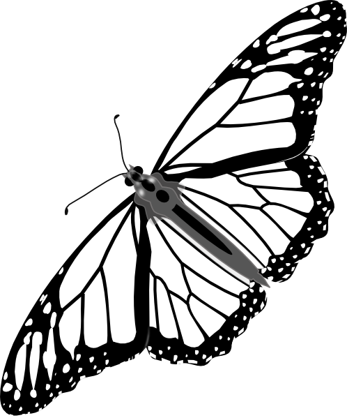 Line Drawing Of Butterfly : Butterfly outline clipart panda free