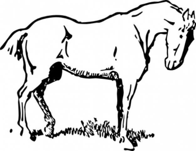 horse lovers clip art - photo #8